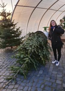 Weihnachtsbaum Traum mieten Hannover
